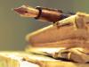 profitable-writing
