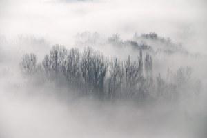 fog-06